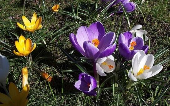 Frühlingsbrunch am Sonntag, 03. April